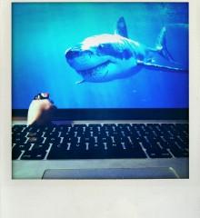 carte postale pingouin requin moineauxandco