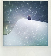 carte postale pingouin tempête neige moineauxandco