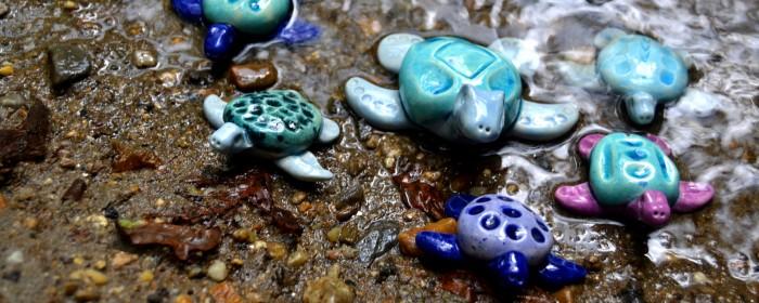 Une nouvelle espèce, les tortues bretonnes !